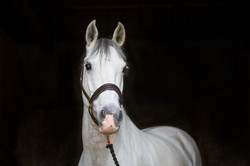 Horse Photography | Ulverston