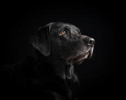 Dog Portrait | Ulverston