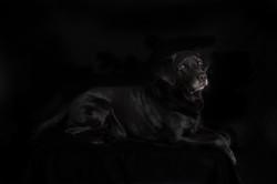Dog Photography | Ulverston