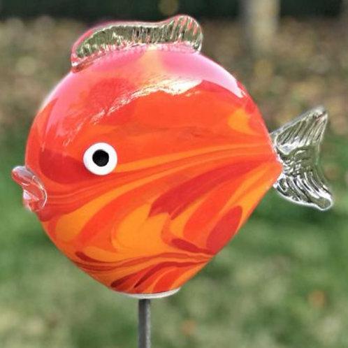 Kugelfisch Mini