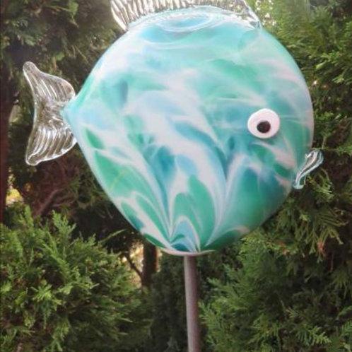 Kugelfisch Groß