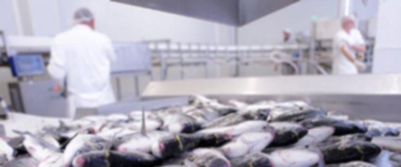 Lavorazione del pesce