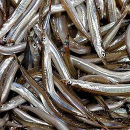 Farina e olio di pesce sand eel