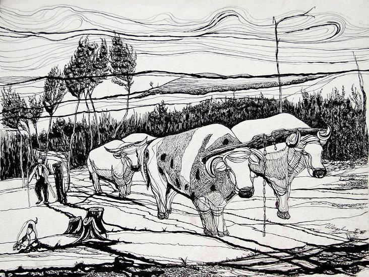 Ox Herd