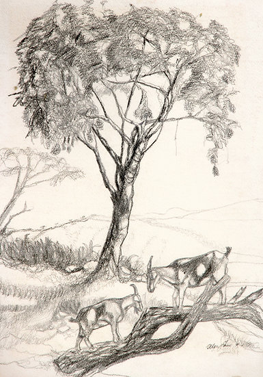 Goats by a Guinep Tree