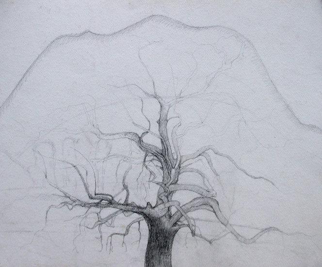 Old Oak, Malibu Canyon