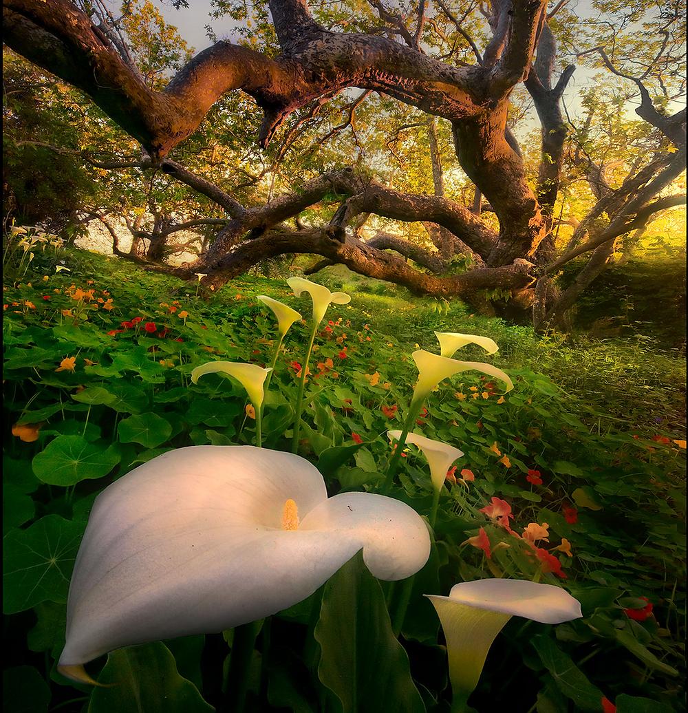 Marc Adamus Tree Landscape