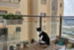 רשת למניעת נפילת חתולים במרפסת