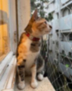 רשת שקופה נגד נפילת חתולים בחלון