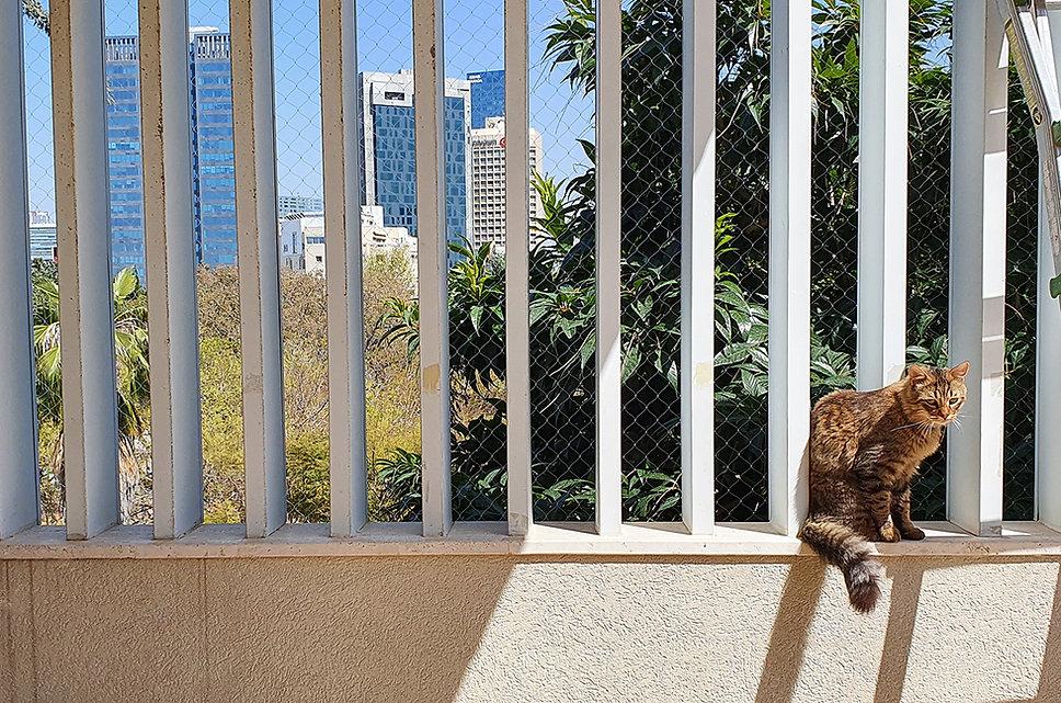 רשת למניעת נפלת חתולים במרפסת שבגג