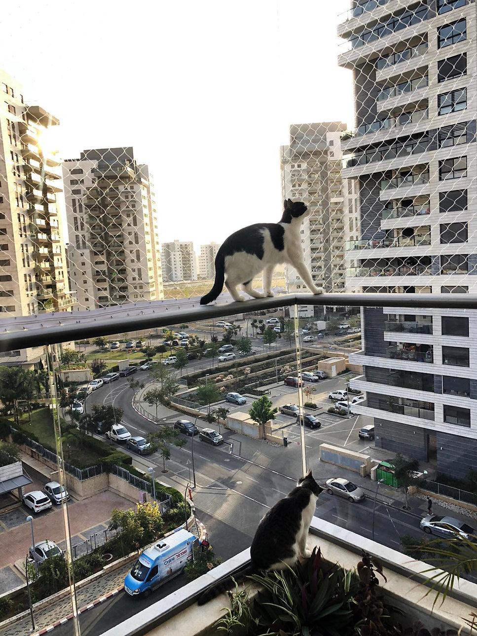 רשת למניעת נפילת חתולים ממרפסת- כנפיים