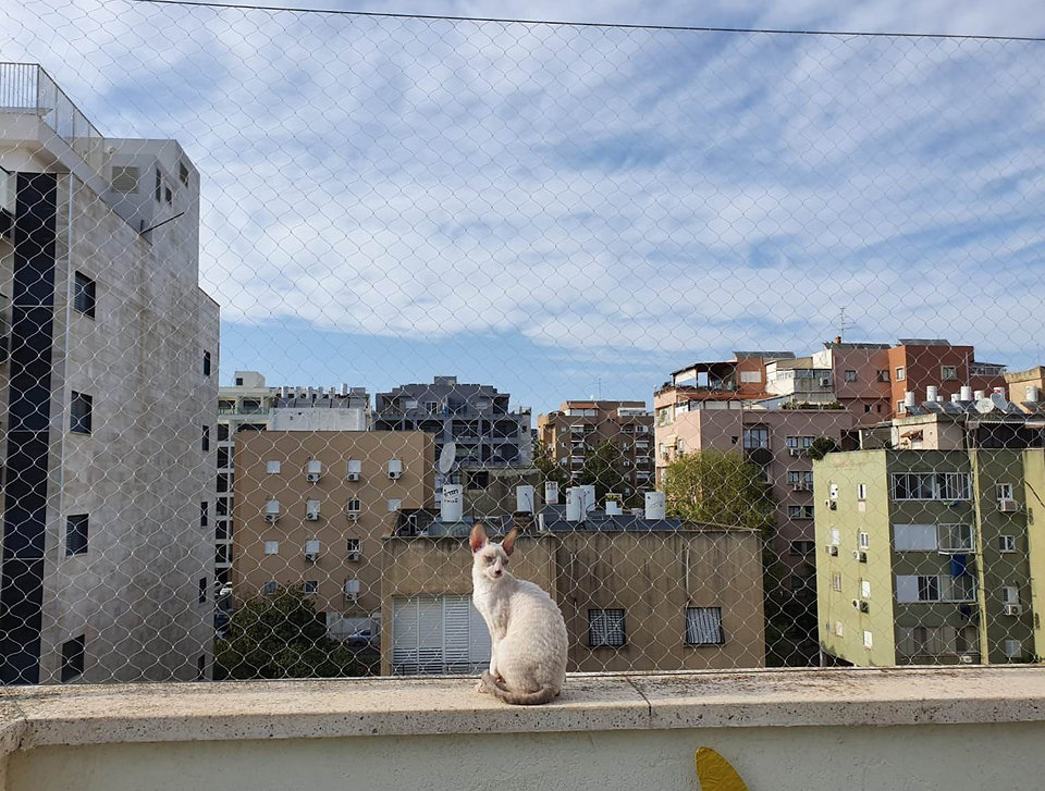 רשת למניעת נפילת חתולים במרפסת בגג