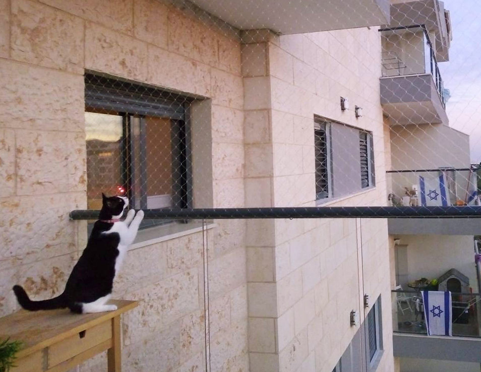 רשת נגד נפילת חתולים במרפסת- כנפיים הרחק
