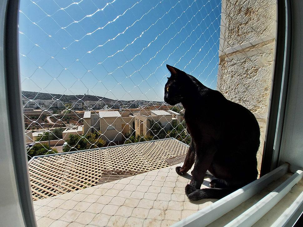 רשת למניעת נפילת חתולים - כנפיים
