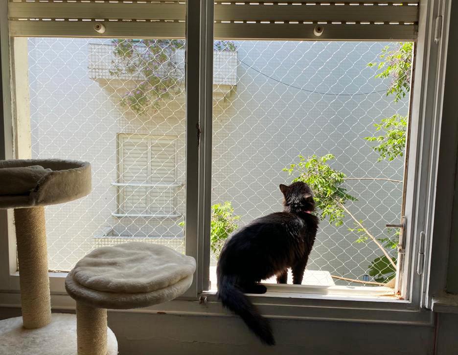 רשת שקופה למניעת נפילת חתולים בחלון