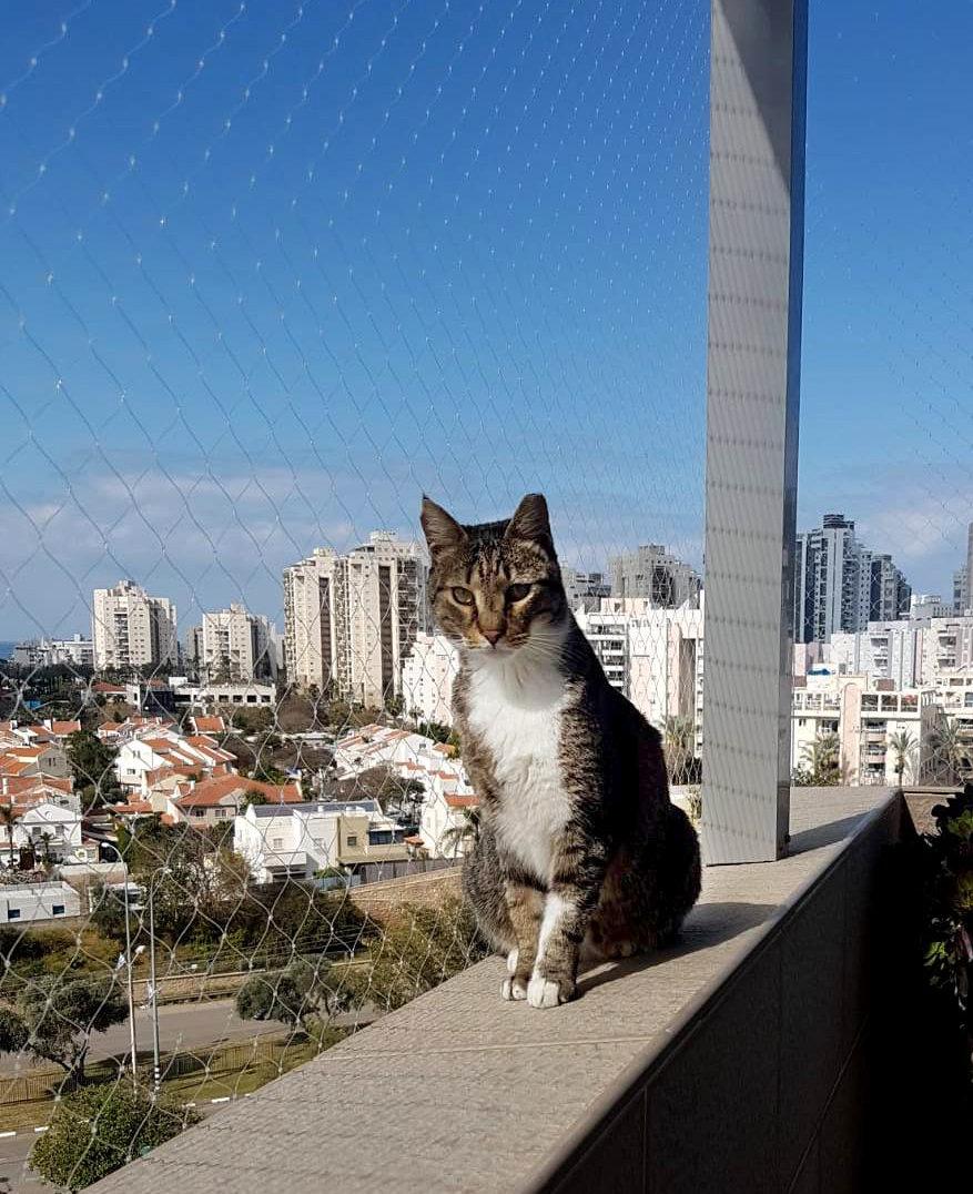 רשת נגד נפילת חתולים - כנפיים