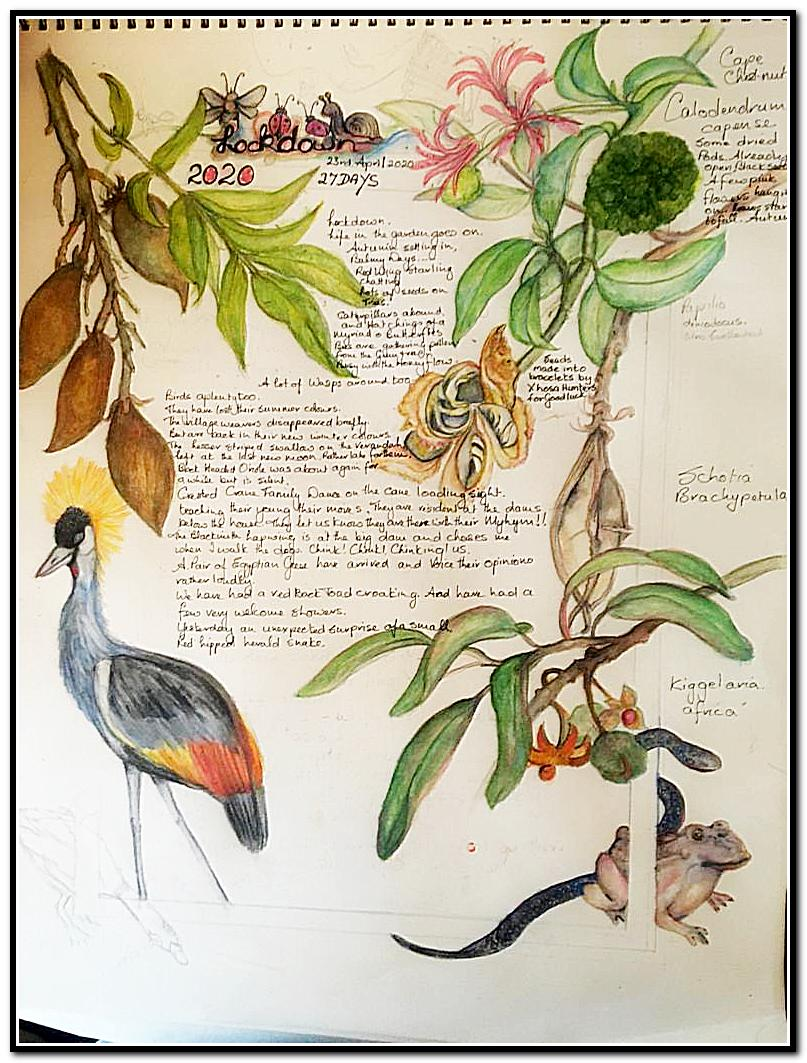 Words and painted bird, plants and frog