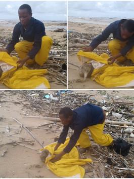 Siphiwe rescuing a seabird