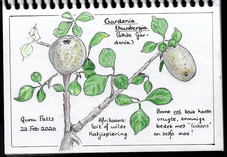 Nature journal entry by Marianne de Jager, Howick, KZN, South Africa