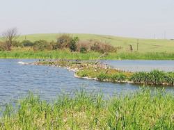 Narrow strip of land jutting into lake with sugar can fields in background