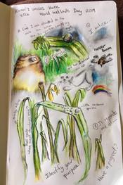 nature journal entry by Karen Zunckell, Hilton, KZN