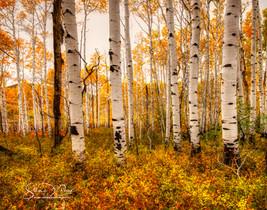 Stan_Crane_-_©stancranephotography.com-
