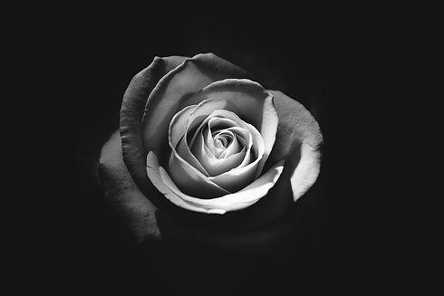 rose-1245972_1920.jpg
