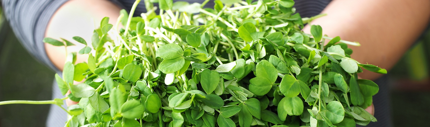 Healthy and delicious microgreens