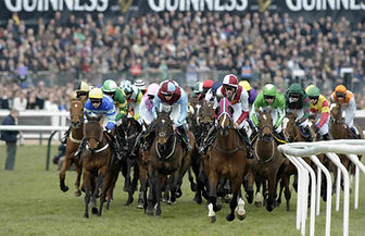 Horses at the Cheltenham Festival