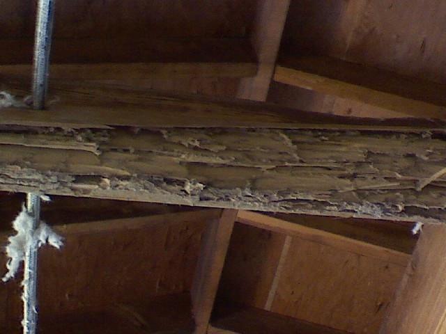 termite3.JPG