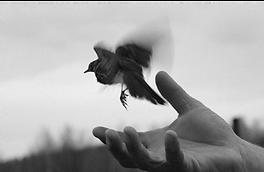 Bird released free