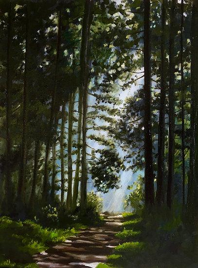 Sunlit Path- Lower Woods
