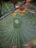 spiderweb crop.JPG