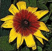 Poster flower - poster edges effects.jpg