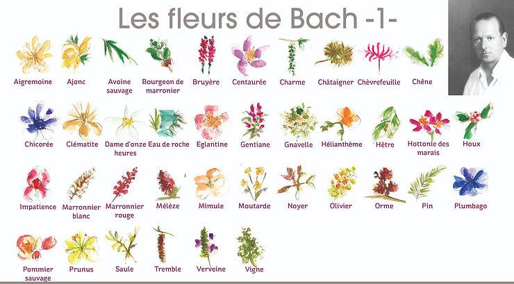 Visuel-Fleurs-de-Bach-1-1-1421981071-154