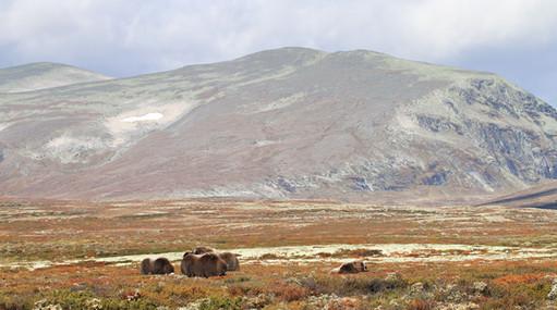 2000-70.jpg