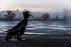 Fowl Play in Winter Fog
