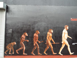 Evolution of Man Mural