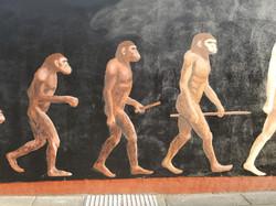 Evolution of Man Mural