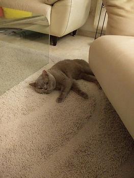 לוק החתלתול.jpg