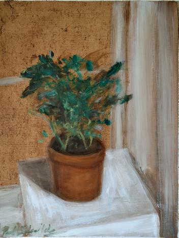 Flower Pot 2 - Still Life in Lockdown Se