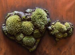 Moss Art 4