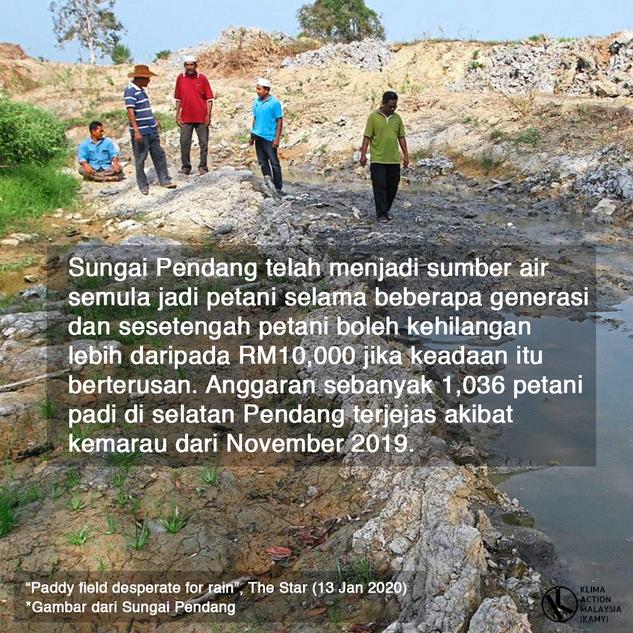 KAMY-padi-7.png