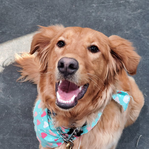 Dog Training - Is it for Everyone?
