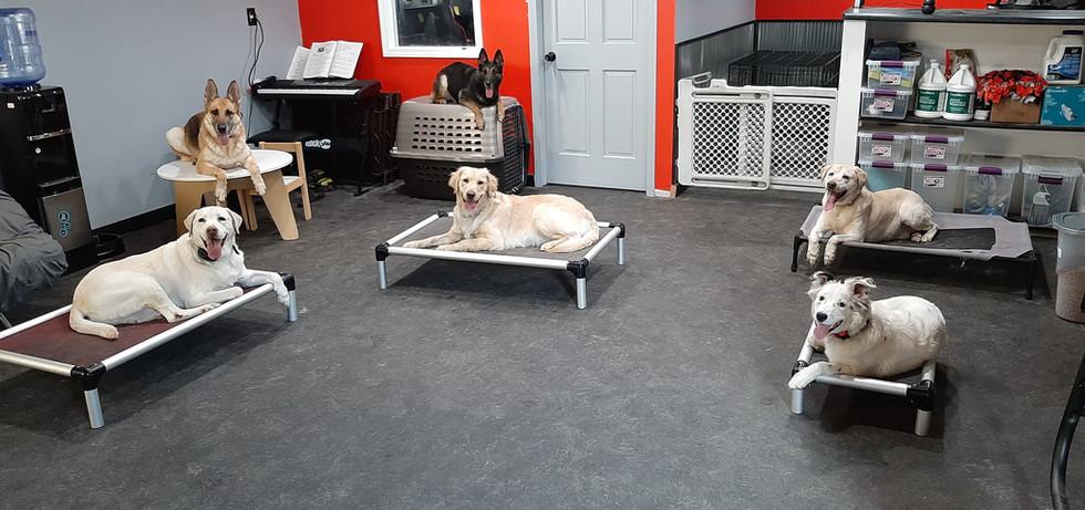 Dog Squad.jpg