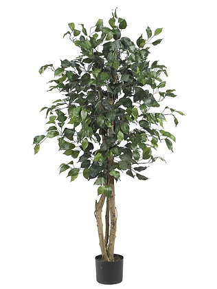 "Artificial Ficus, 48"" high"