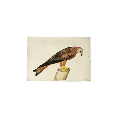 Large print of a bird by so far unknown artist from Sweden mid century