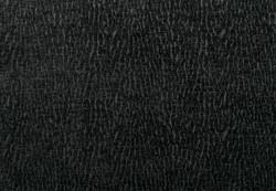 Cascade Blackberry