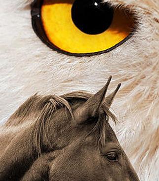 GRCF Les Animaux des R,Guillaume Roche,Stage,Formation,Equitation de spectacle,Cascade équestre,Voltige équestre,Dressage chevaux,Dressage rapaces,Fauconnerie