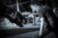 GRCF Les Animaux des R. Guillaume Roche Maître fauconnier, Cascadeur équestre, Régleur de cascade équestre et humaine, Dresseur animalier pour le cinéma.
